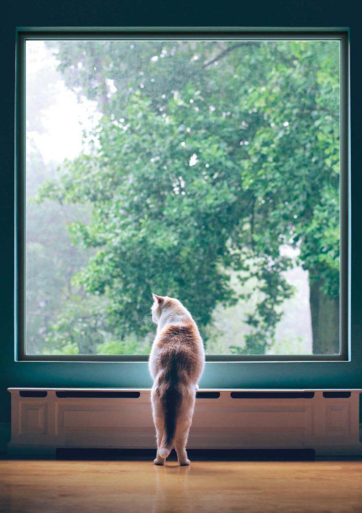 猫も何かを考えているのかな?